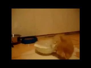 Котенок купается в молоке